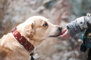 Liability Insurance for Dog Bite Claims Temecula, CA